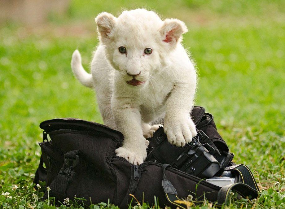 Quale borsa scegliere per proteggere la tua attrezzatura, ecco alcuni consigli
